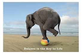 balanced elephant